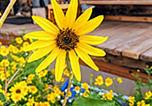 Location vacances Blanding - Tentrr Signature Site - Fairview Acres-4