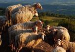 Location vacances Semproniano - Bio Agriturismo I Lapi-2