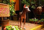 Hôtel Lima - Kaclla, The Healing Dog Hostel-2
