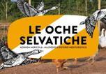 Location vacances Bicinicco - Agriturismo Le oche selvatiche-3