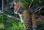 Camping avec WIFI Sri Lanka - Rivosen Camp Yala Safari-3